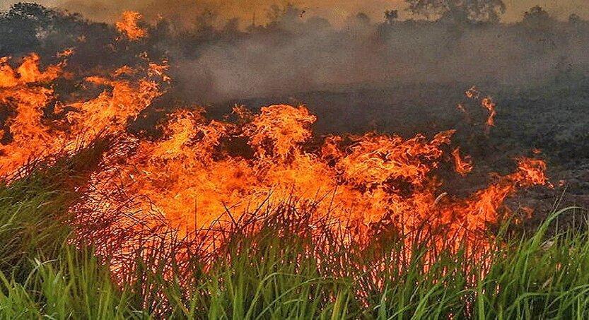 مشارکت نیروهای نظامی برزیل در کنترل آتش سوزی آمازون