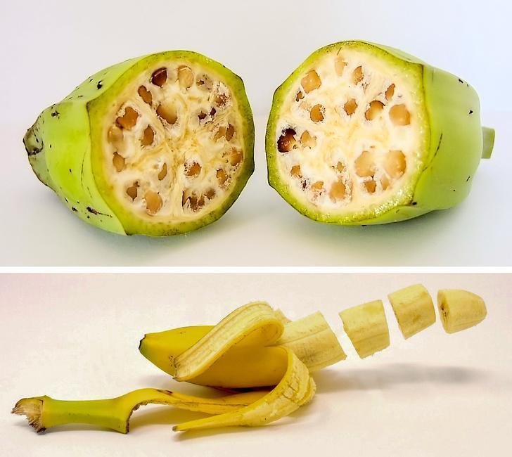 میوه ها و سبزیجات امروزی در گذشته چه شکلی بوده اند؟