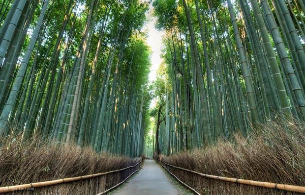جاذبه های گردشگری و مناطق دیدنی شهر کیوتو ژاپن