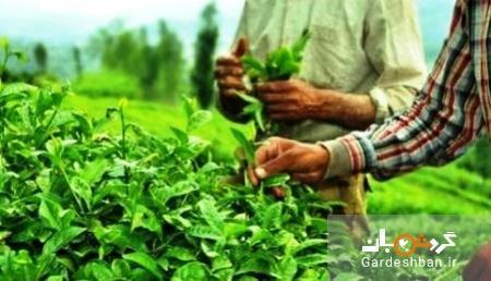 گردشگری کشاورزی چیست و چرا هوادار دارد؟
