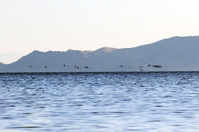 افزایش 13 میلیمتری تراز آب دریاچه ارومیه با وجود کاهش بارش ها