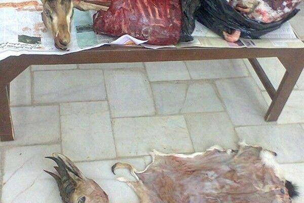 خبرنگاران کشف 10 لاشه آهو از مخفیگاه شکارچی متحلف در شهرستان انار