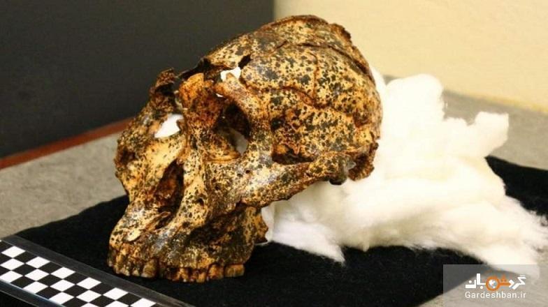 کشف جمجمه دو میلیون ساله عموزاده اجداد انسان