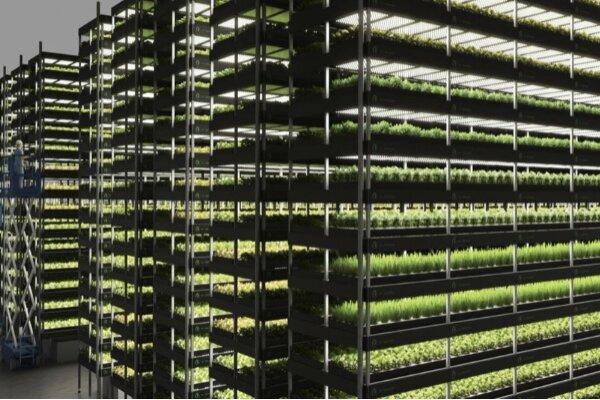 پرورش گیاهان در مزرعه عمودی بدون نور خورشید و خاک!