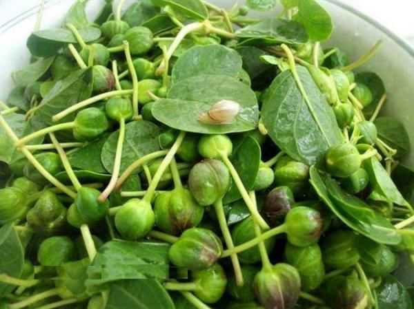 گیاه کَبَر؛ بهبود عملکرد کبد